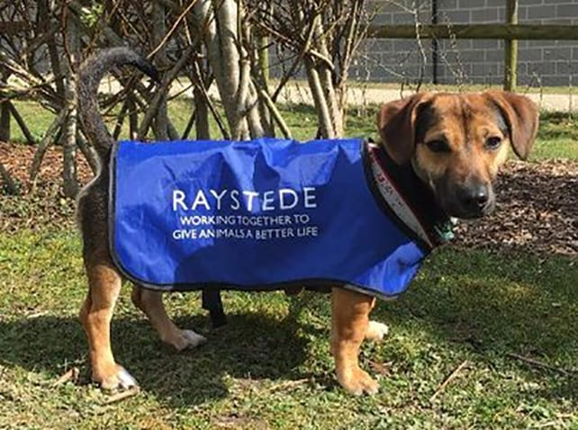 Adelphi staff support Raystede Animal Welfare Centre